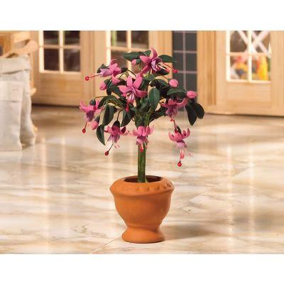 Standard Fuchsia Plant
