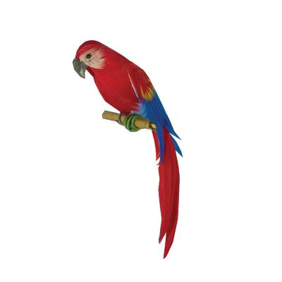 Timothy the Macaw Parrot