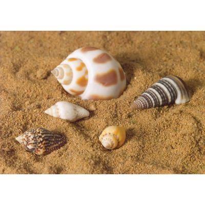 Sea Shells, 5 pcs