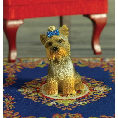 Boo the Yorkshire Terrier Dog (PR)