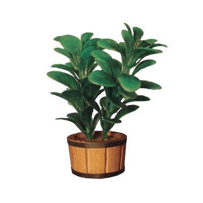 Double Rubber Plant
