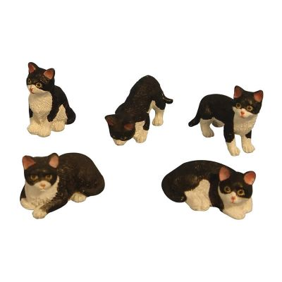 5 Asst Black/White Cats