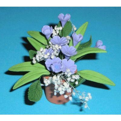 Blue Frescias in Pot
